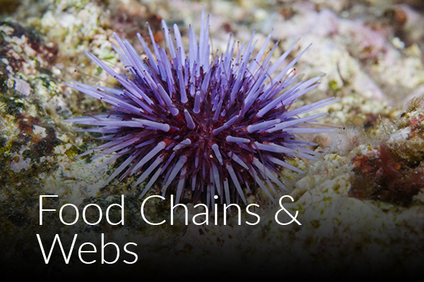 food-chains-webs