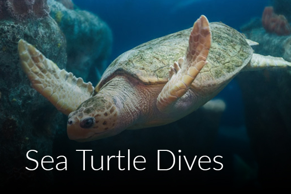 sea-turtle-dives